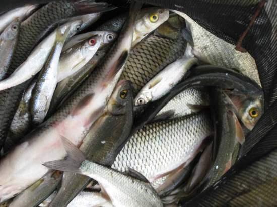 Запленети мрежи и риба, а рибокрадците познати на полицијата