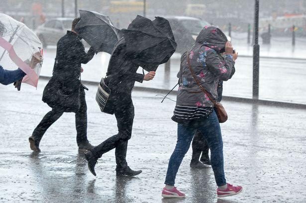 Врнежи од дожд и ветер, на места и грмежи