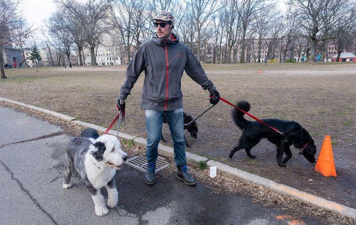 Мора да се овозможи време за шетање на милениците за време на полицискот час