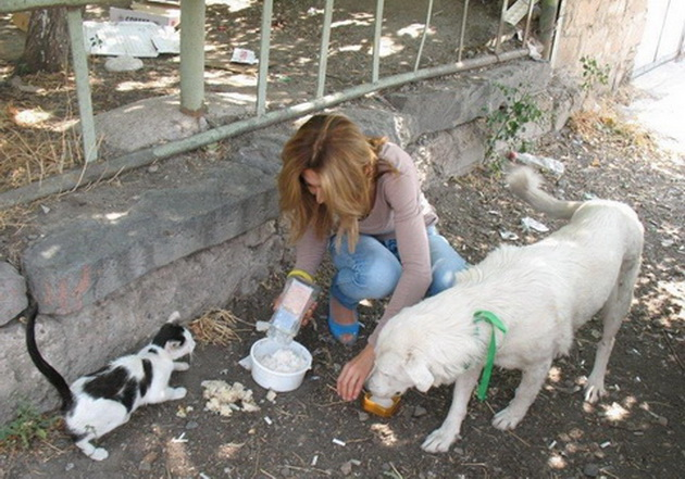"""Да се дозволи движење на активистите кои се грижат за бездомните животни, бара """"Анима мунди"""""""