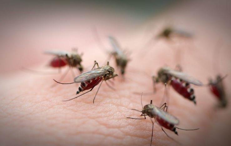 Близу Париз откриен нов вирус кој го пренесуваат комарците