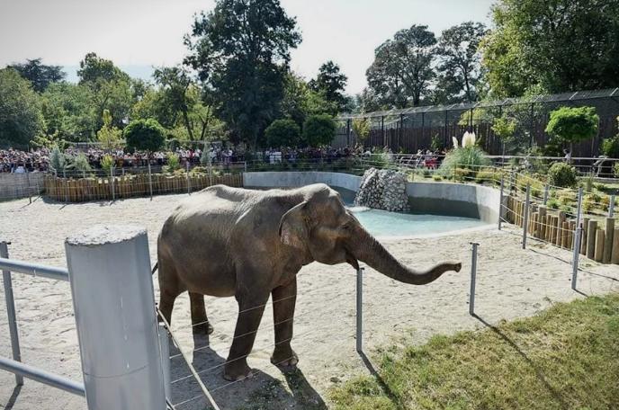 Слон турнал столб за електрична енергија: Евакуирана скопската зоолошка градина