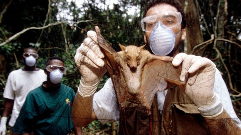 СЗО: Вирусот најверојатно потекнува од лилјаците