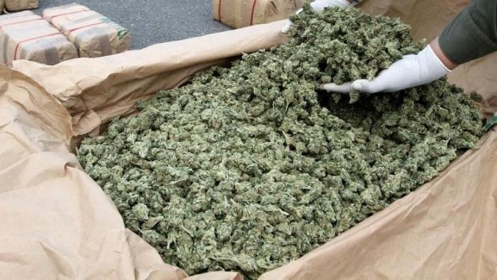 Голема акција во Гевгелија: Запленети 200 килограми марихуана