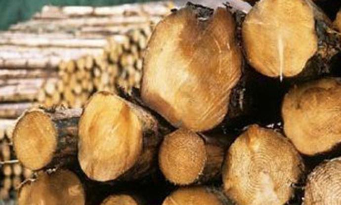 Дале пари, но дрва не добиле – измамени пензионери во Штип и Свети Николе