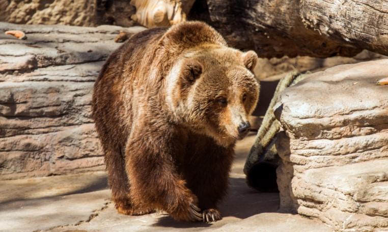 По 60 години, мечките во Зоо Скопје ќе добијат нови живеалишта
